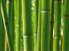Bamboo, photo murale, 360x254 cm, 4 parts