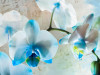 Blues flowers, photo murale, 360x255 cm, 4 parts