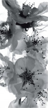Black and white flower, paper photo mural, 90x202 cm, 1 part