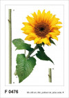 Sun flower, Grand sticker mural 65 x 85 cm