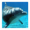Dolphin, Photo pour accrocher au mur faite en plexiglass 29 x 29 cm