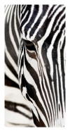 Zebra, Photo pour accrocher au mur faite en plexiglass19 x 36 cm vertical