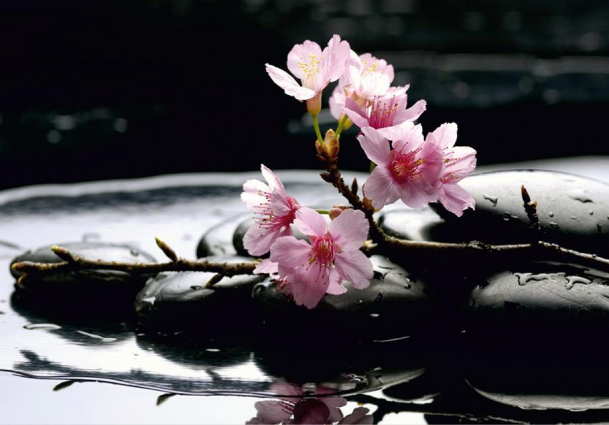 Sakura blossoms on stones, photo murale, 360x254 cm, 4 parts