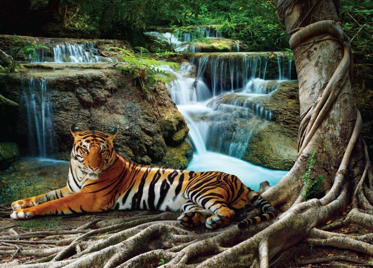 Tiger at waterfall, photo murale, 160 x 115 cm, 1 part
