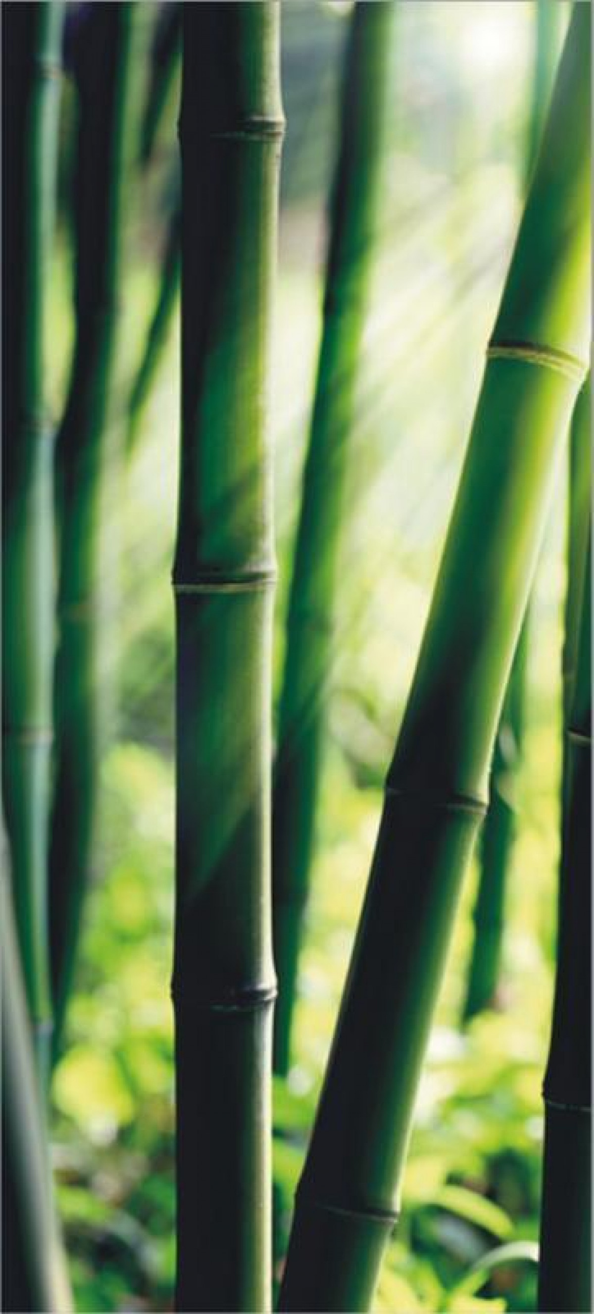 Bamboo, paper photo mural, 90x202 cm, 1 part
