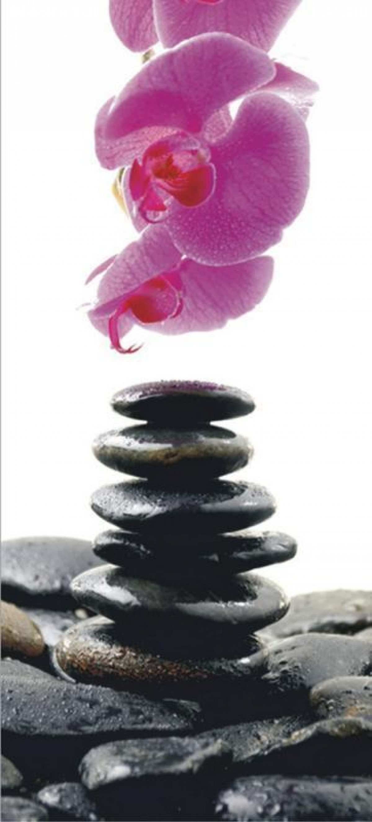 Stones and orchid, paper photo mural, 90x202 cm, 1 part