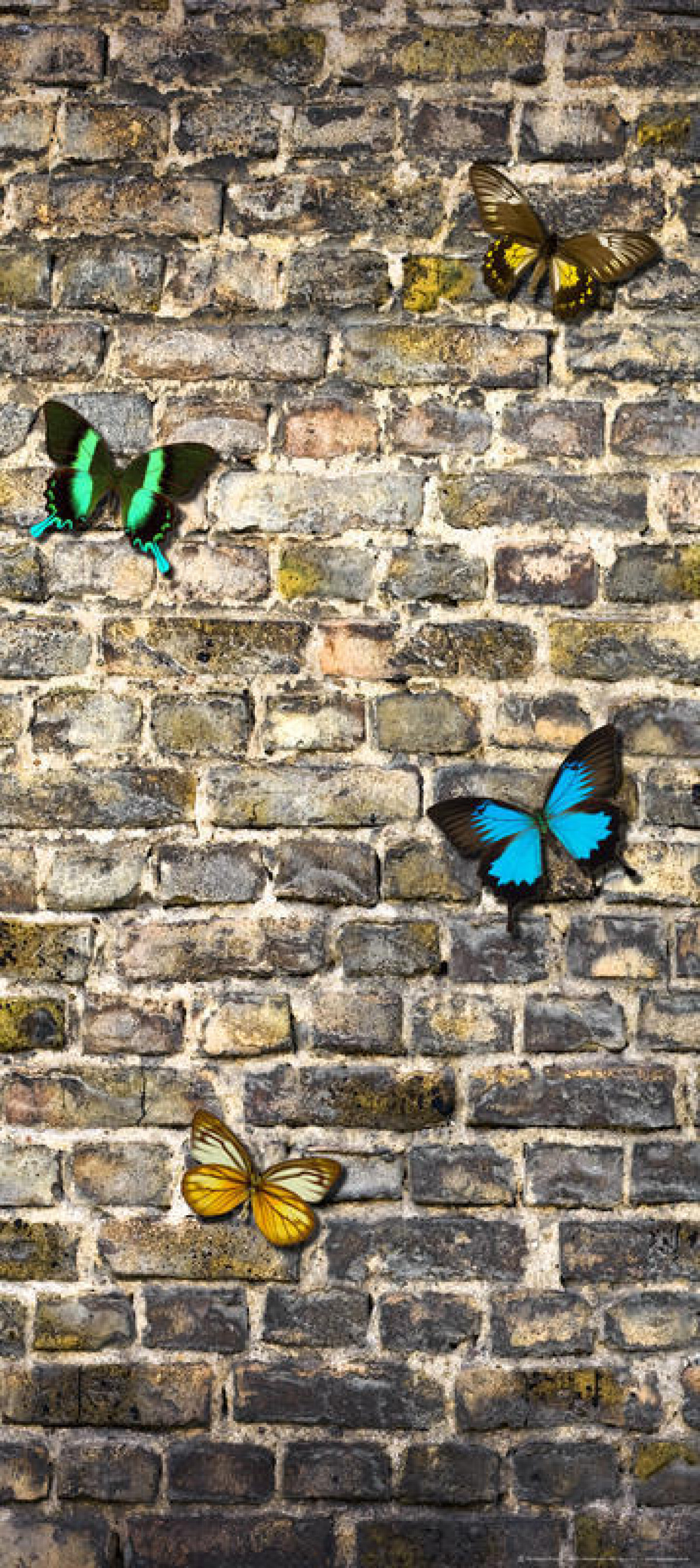 Butterfly on the wall, paper photo mural, 90x202 cm, 1 part