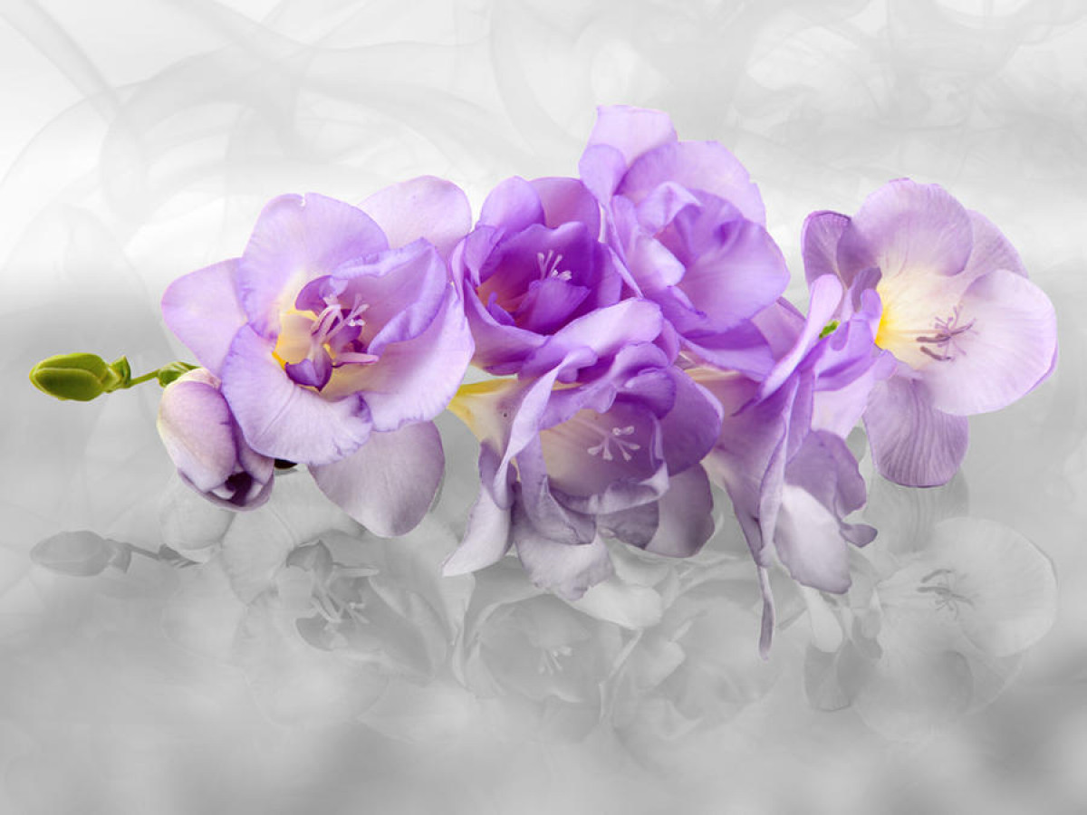 Orchid 3D, photo murale intissée, 360x270 cm, 4 parts