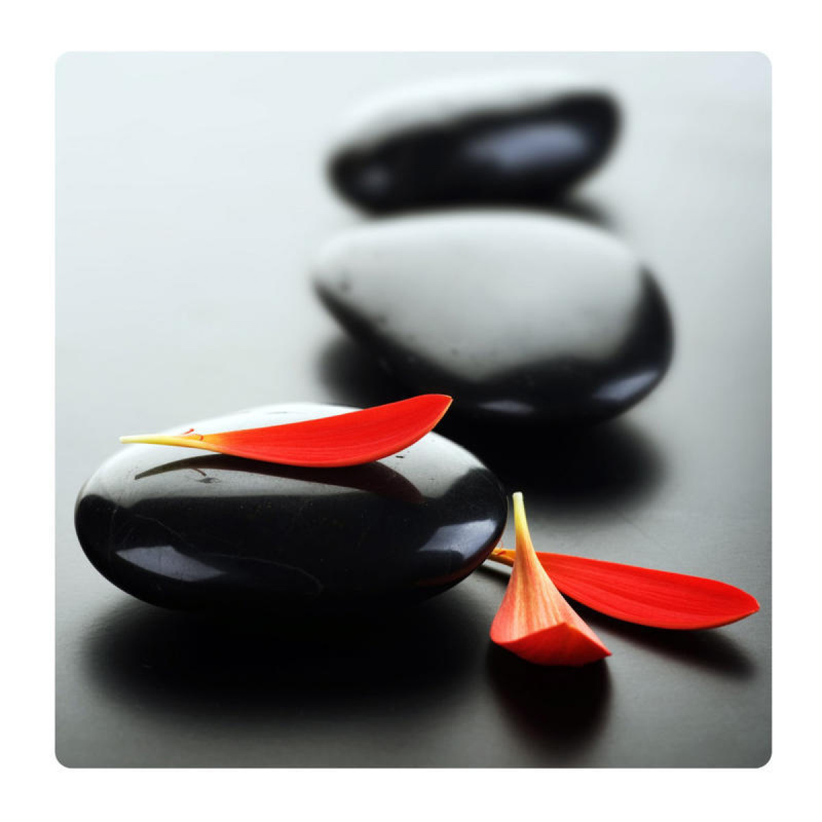Black rocks and petals, Photo pour accrocher au mur faite en plexiglass 19 x 19 cm