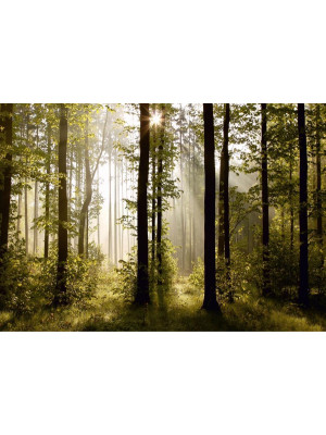 Morning forest, photo murale, 360x254 cm, 4 parts