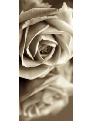 Sepia rose, intissé photo mural, 90 x 202 cm, 1 part