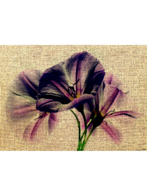 Poster Thème Lily On Canvas - 160 x 110 cm