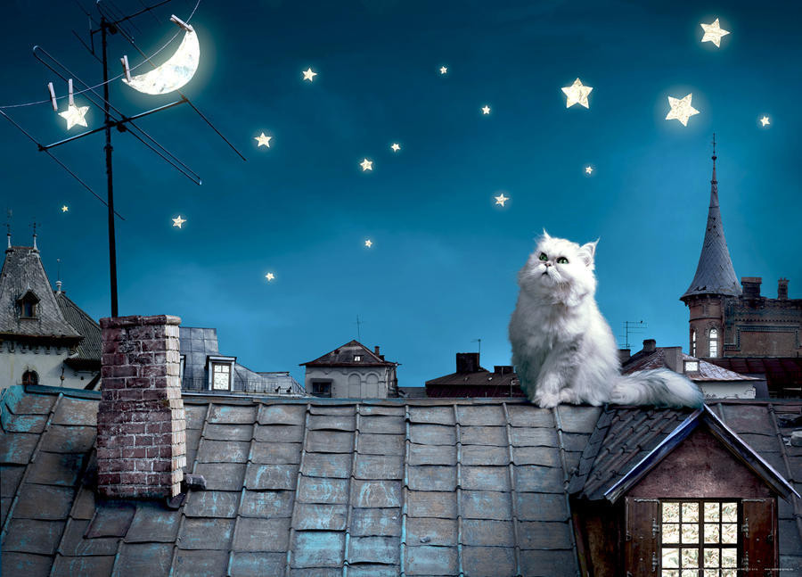 Cat on the roof, photo murale, 160 x 115 cm, 1 part