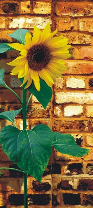 Sunflower on bricks, intissé photo mural, 90 x 202 cm, 1 part